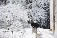 Charme hivernal